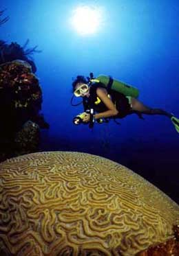 Diving for Brain Coral in the Cayman Islands